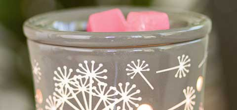 Dandy Wish - July 2015 Warmer of the Month